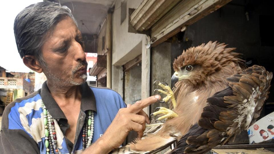 "Earlier it was tough to explain my family but today as they know how important is this duty for me, even they have supported me and given my birds and animals shelter in my residence,"" said Pardeep who has followed the footsteps of Bhagat Puran Singh. (Sameer Sehgal/HT Photo)"