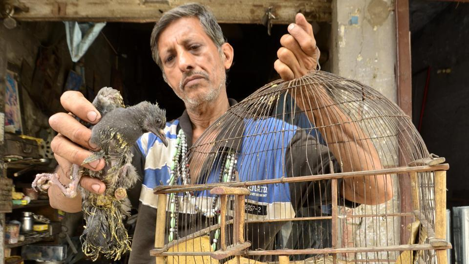"Pardeep Kumar was just six-year-old when his father Madan Lal taught him to love and treat the birds and animals who to there door step and since then he is performing this selfless duty which he defines as ""I am born to repair ,treat, feed, love and keep them in my shelter."" (Sameer Sehgal/HT Photo)"