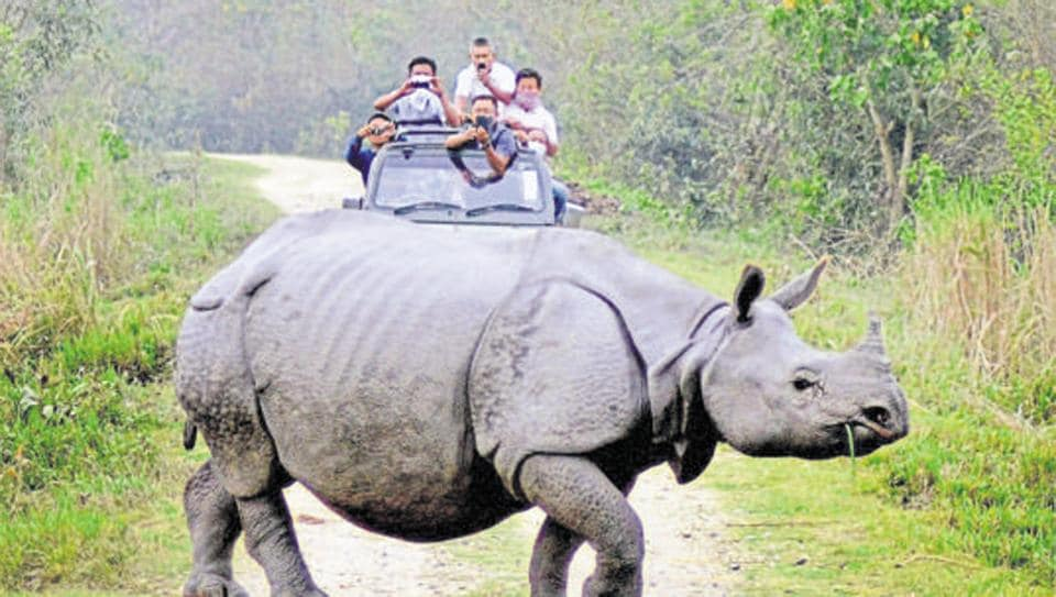 Tourist watch a Rhino during a Safari on World Wildlife Day in Kaziranga National Park in Assam.