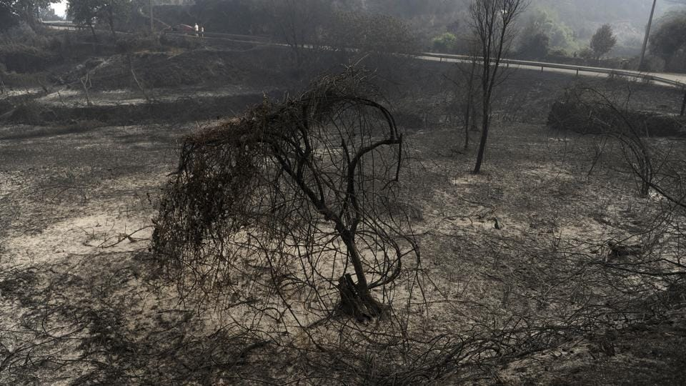 Environmentalists have warned that the country needs to improve on its forest management and fire monitoring capabilities. (Paulo Duarte/AP)