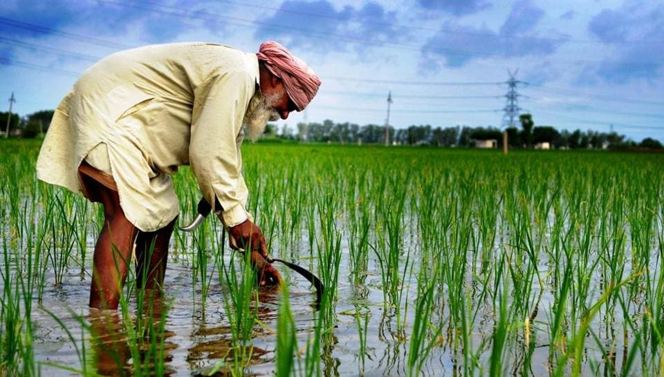 What About Farming In Punjab Budget Spike In Outlay