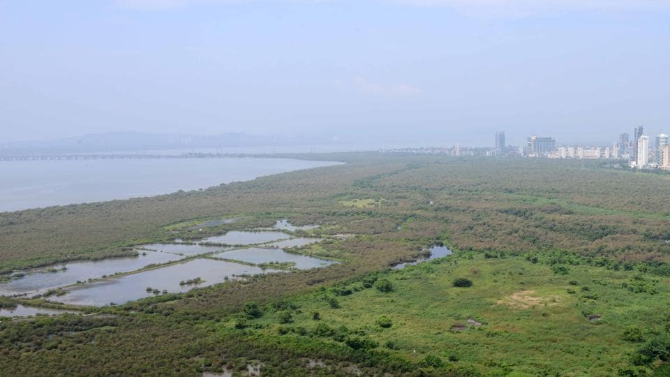 The Mira Bhayander Municipal Corporation said the mangroves were their work of clearing sludge and debris.