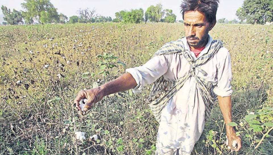 File photo of a farmer in Punjab's Bhatinda. The Amarinder Singh government on Monday joined Uttar Pradesh and Maharashtra to write off loans of small and marginal farmers.