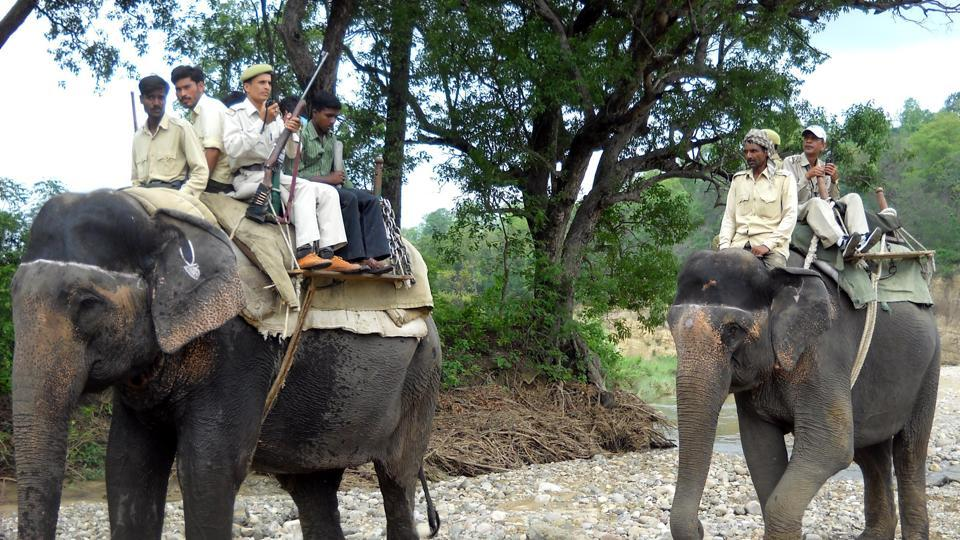 Forest guards ride elephants during patrol duty in Corbett tiger reserve.
