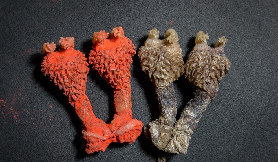 Tantric,Hatha Jodi,Monitor Lizards