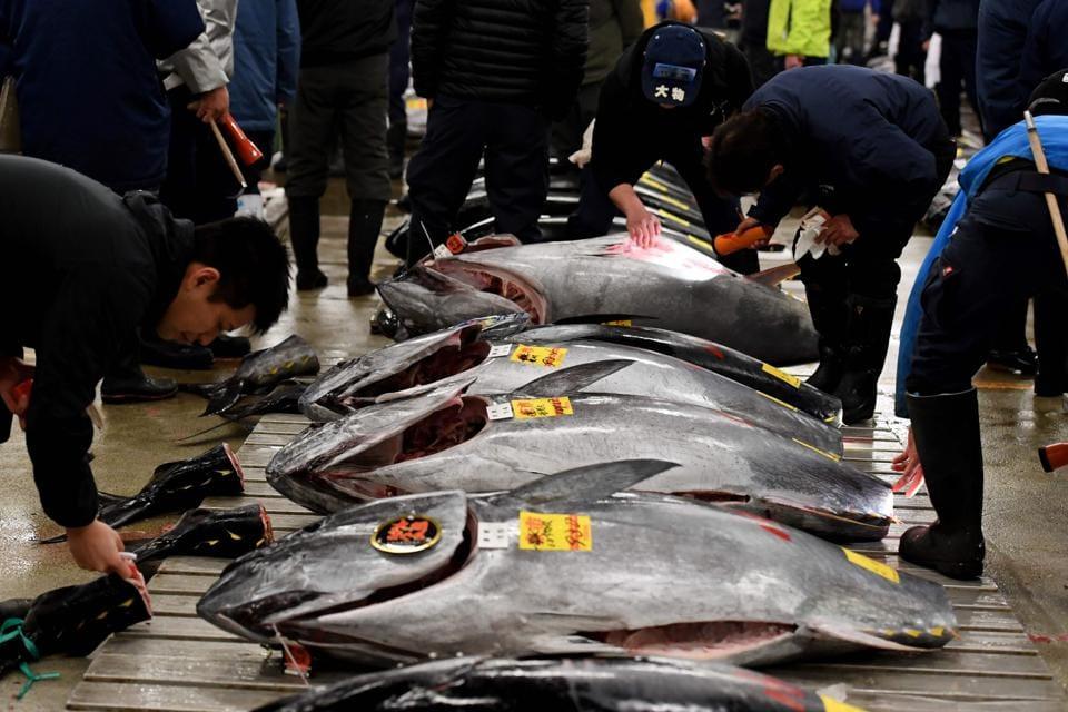 File photo of fishmongers checking bluefin tuna at the Tsukiji fish market in Tokyo.