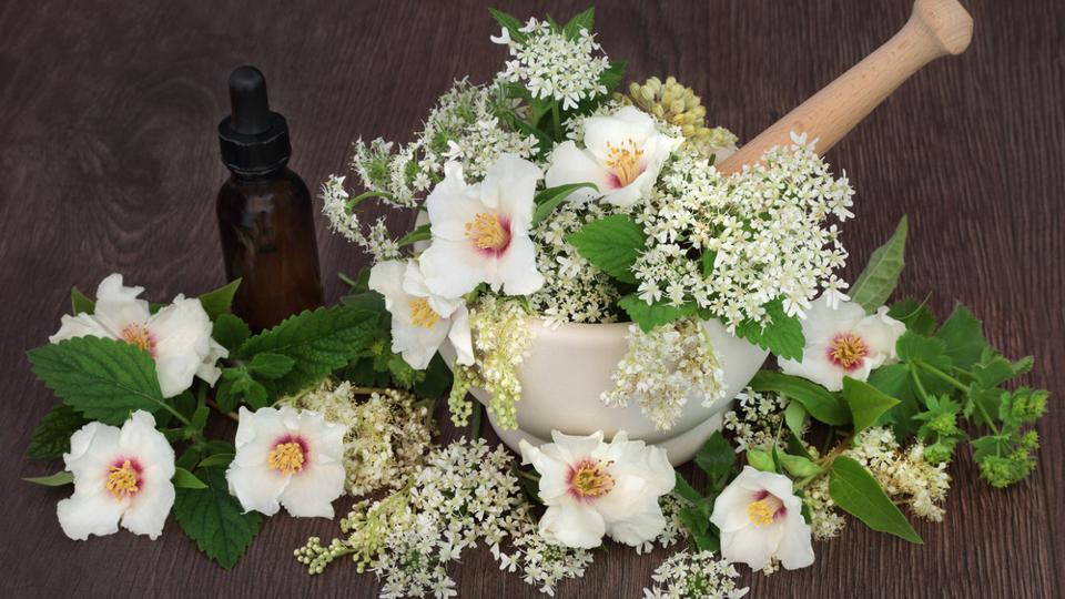 Homoeopathy: Grow a healing garden in your house comprising
