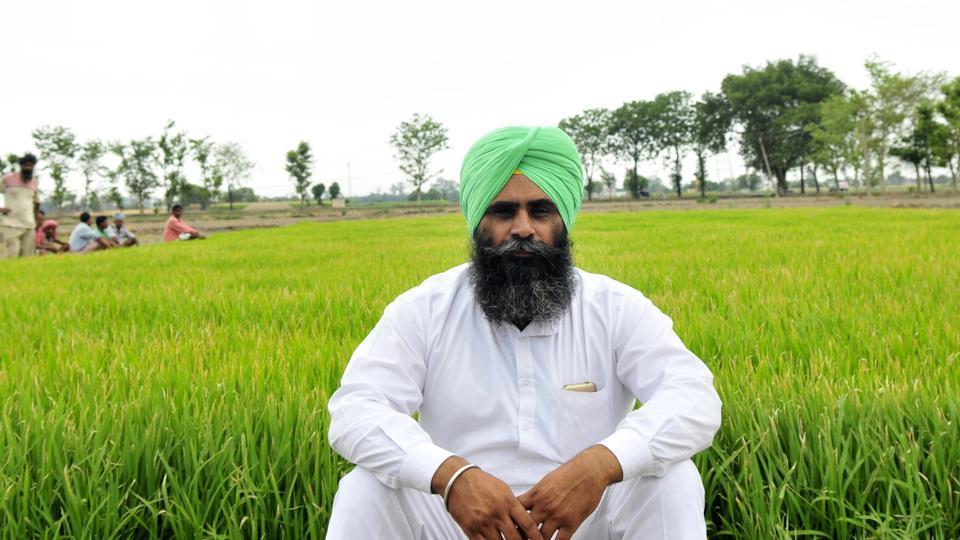 Farmer Gurmukh Singh in his field in Pandriali village in Sirhind district of Punjab.