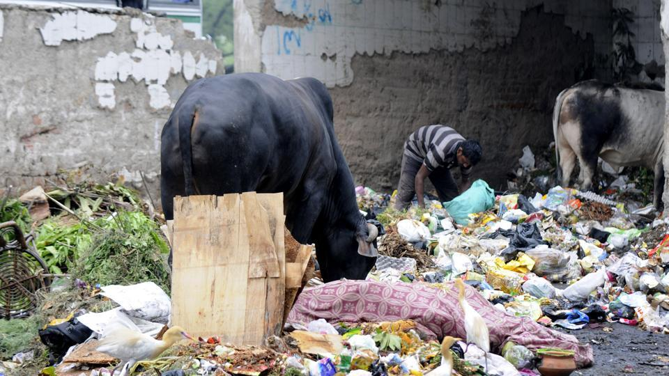 The authority will also look at scientific methods of waste disposal to address sanitation issues.