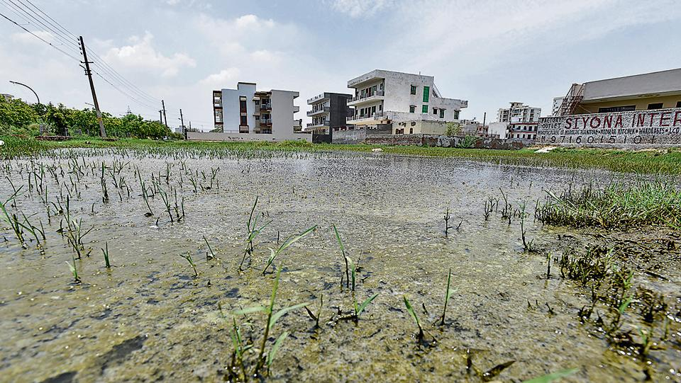Stagnant water in Gurgaon's Sector 9. Health officials are currently in the process of compiling a list of areas from where a large number of suspected malaria cases have been reported. The list will be forwarded to the MCG.
