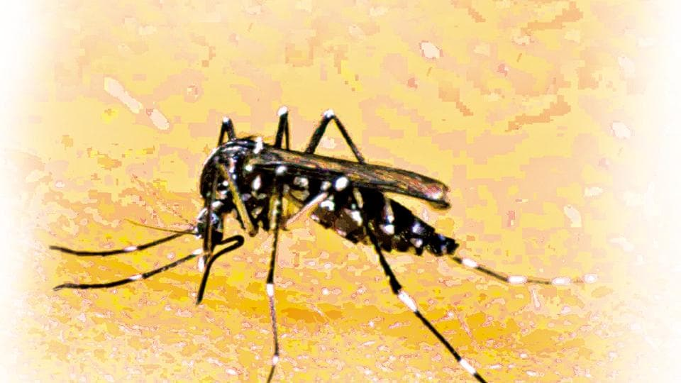 The symptoms of dengue include abrupt and high fever, severe headache, muscle and joint pains.
