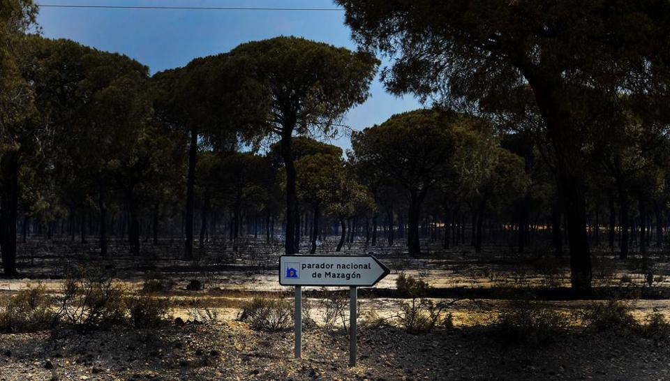A picture taken on July 25, 2017 shows a burnt area after a wildfire in Mazagon, at the Donana National Park. More than 1,500 people were evacuated as a precaution on June 25, 2017 after a fire broke out at a nature reserve in southern Spain famed for its biodiversity.