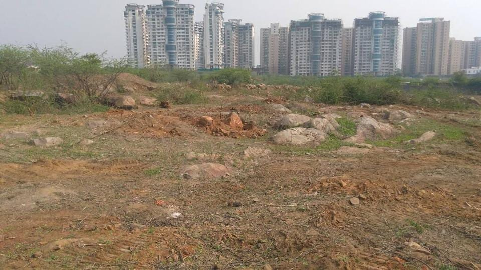 The 52-acre plot at Sarai Khwaja in Faridabad district where 10,000 trees were chopped.