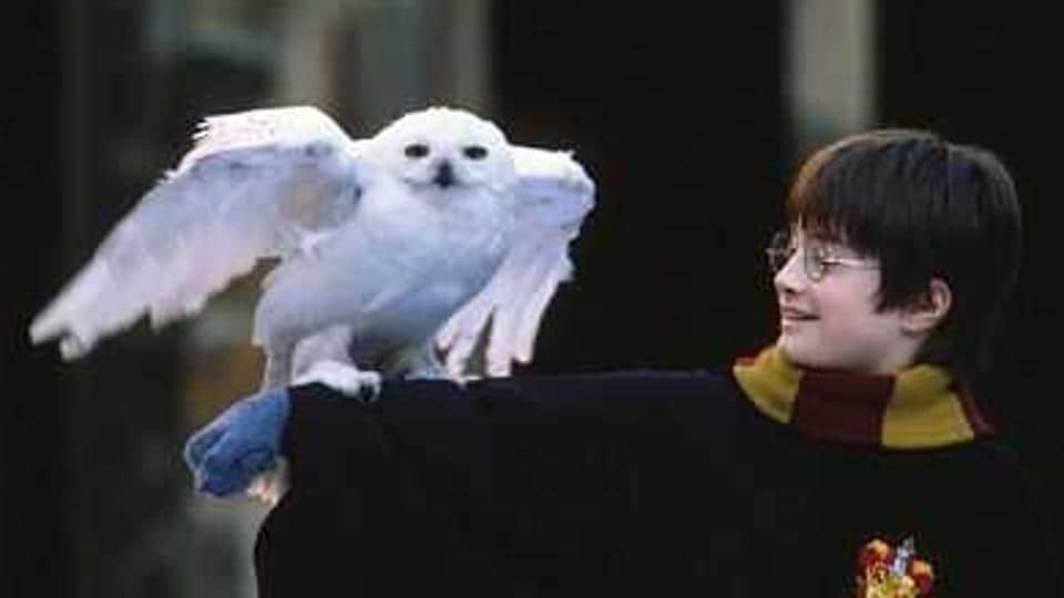 Revisit Harry's first year at Hogwarts with our quiz and find out how much you still remember.