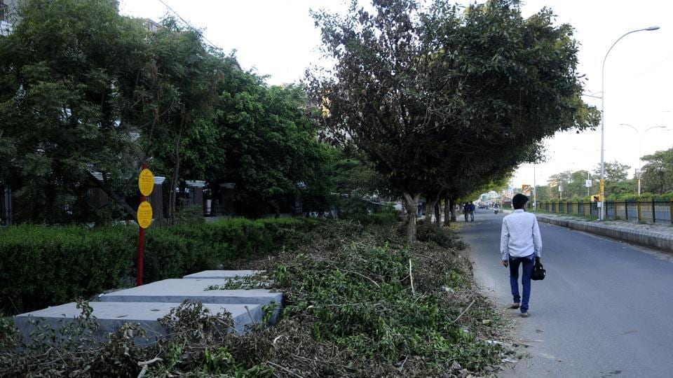 Environmentalists allege that tree felling is rampant in Noida.