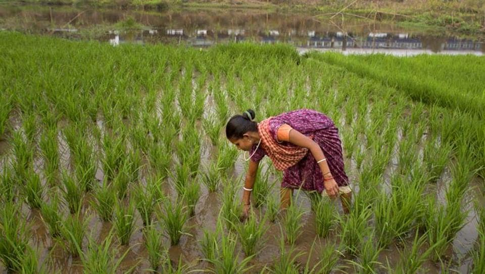 Around 60% of the net cultivated area in India of 142 million hectares is rain-dependent. Of all the regions, the bulk of peninsular India depends heavily on the south-west monsoon