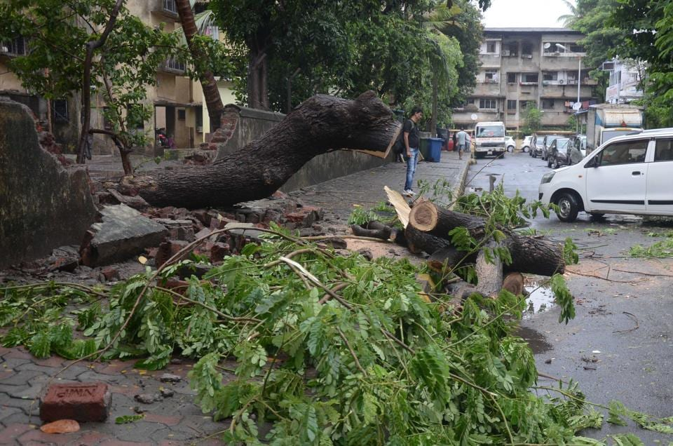 A wall collapsed after a tree fell on it.