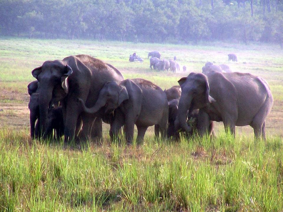 A herd of elephants at Corbett Tiger Reserve in Uttarakhand's Ramnagar.