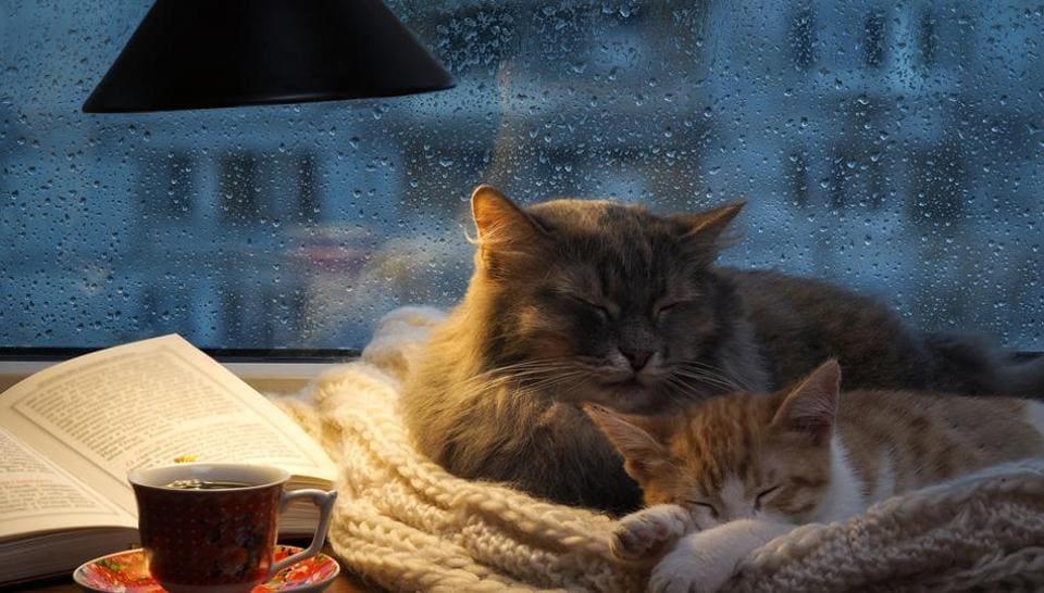 Home,Decor,Monsoon