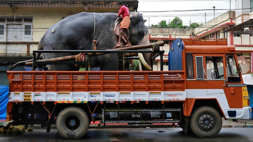 An elephant is chained as he is transferred on a truck for the annual temple festival in Kochi, Kerala. (Sivaram V. / Reuters)