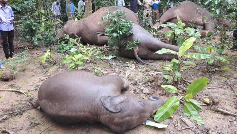 Last week, a family of four elephants was electrocuted by a low-hanging power line in a coffee plantation in Karnataka's Kodagu district .