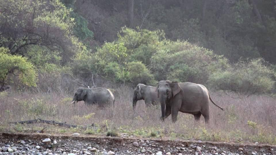The Rajaji National Park has a good number of elephants.