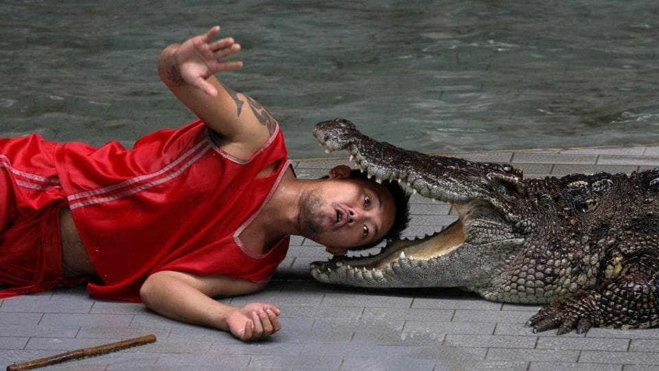 A zoo performer reacts as he puts his head between the jaws of a crocodile during a performance for tourists at Sriracha Tiger Zoo. (Athit Perawongmetha / Reuters)