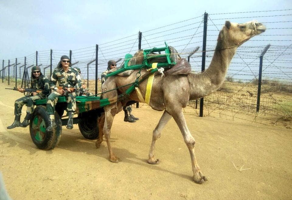 A camel cart is used for patrolling the international border in Jodhpur.