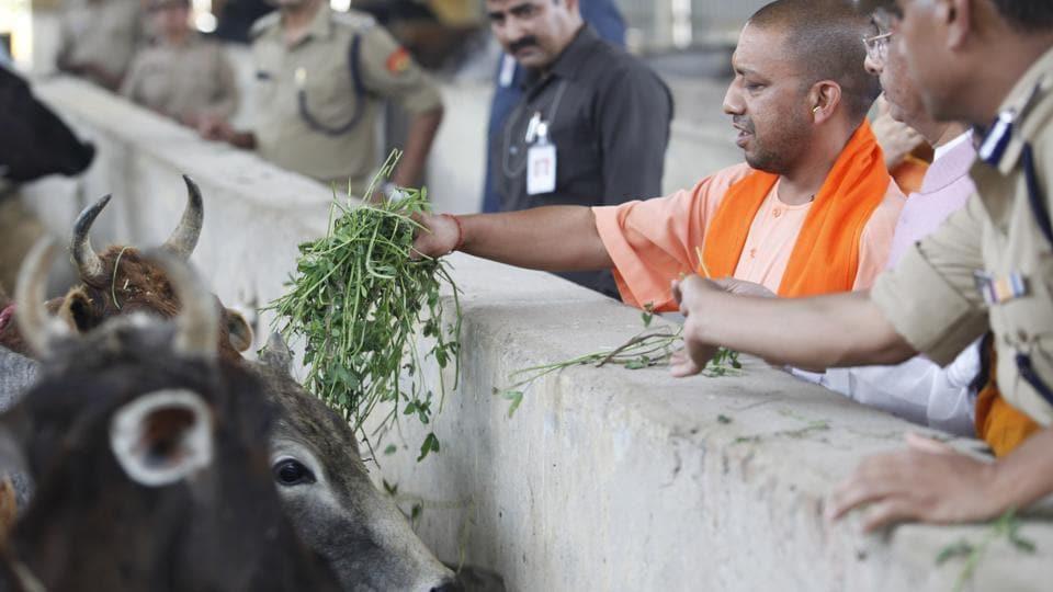 Cow shelter,Jeev Ashraya,Yogi Adityanath