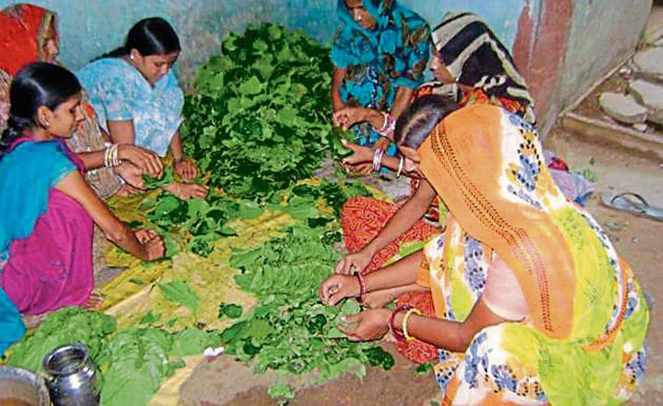 Women working at a betel leaf farm in Bharatpur.