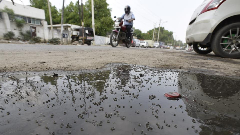 Mosquito breeding,MCD,dengue