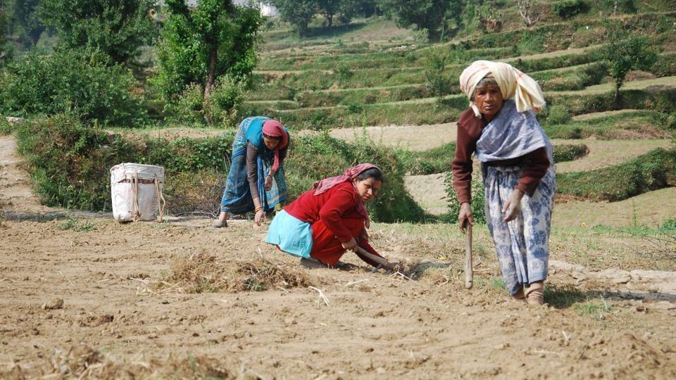 Uttarakhand News,gender budget,Prakash Pant