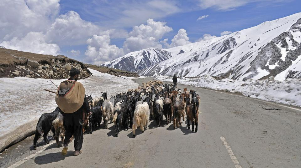 A herdsman with his flock of sheep and goats crosses a road in the mountains.