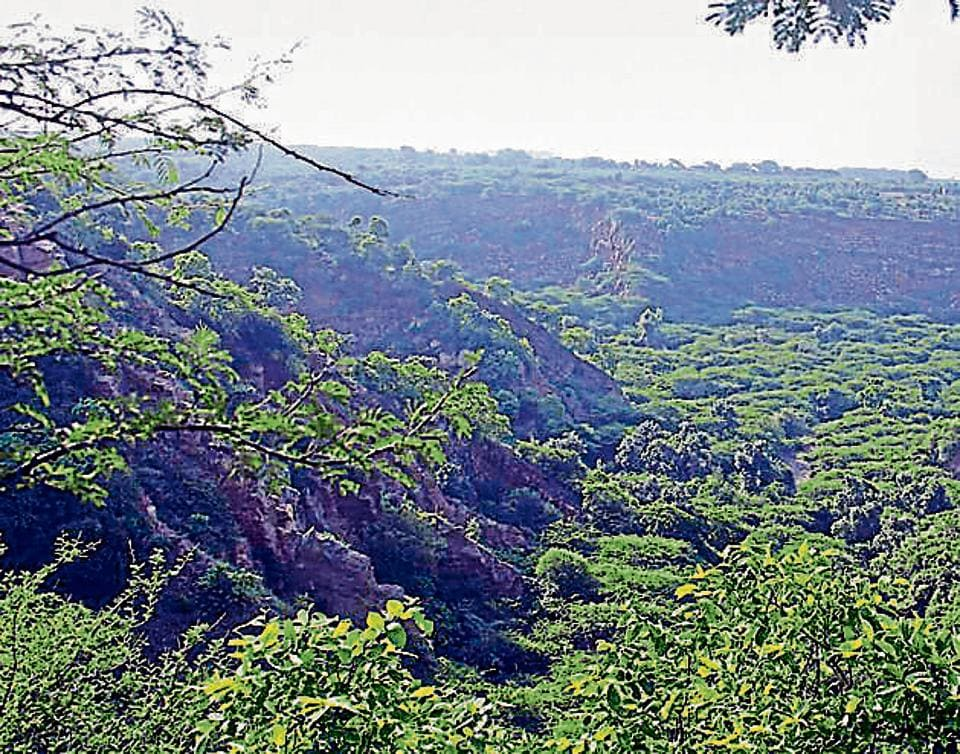 There are strict rules forbidding construction activities and cutting of trees in the Aravallis.