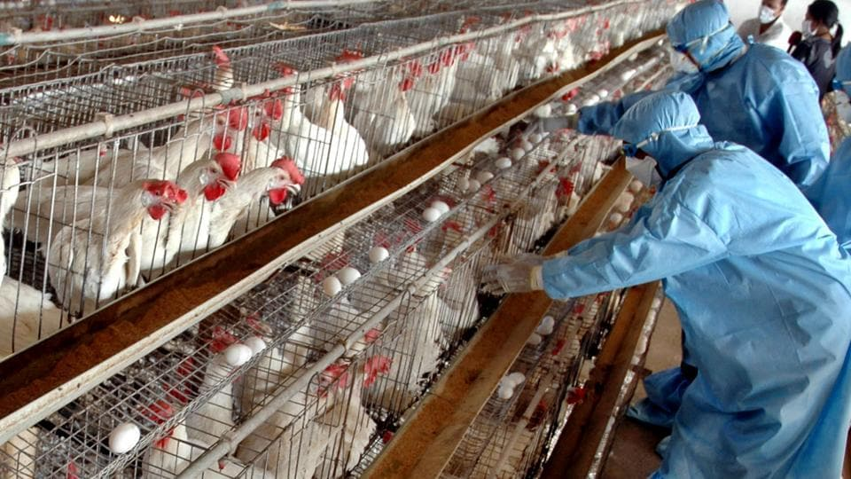 India,Avian Influenza,Bird Flu
