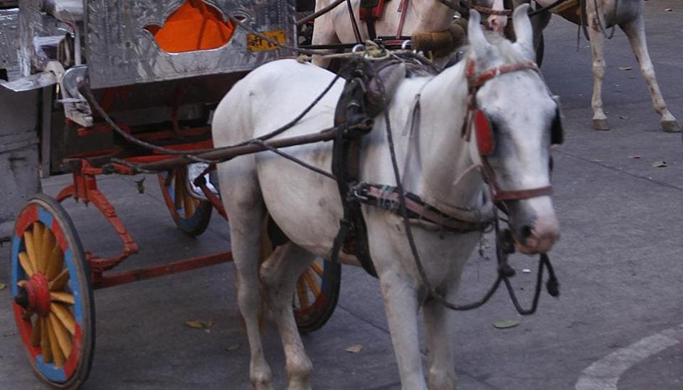 The court was responding to a public interest litigation filed by NGO Animals and Birds Charitable Trust, which raised concerns over how the horses and carriage owners would be rehabilitated.