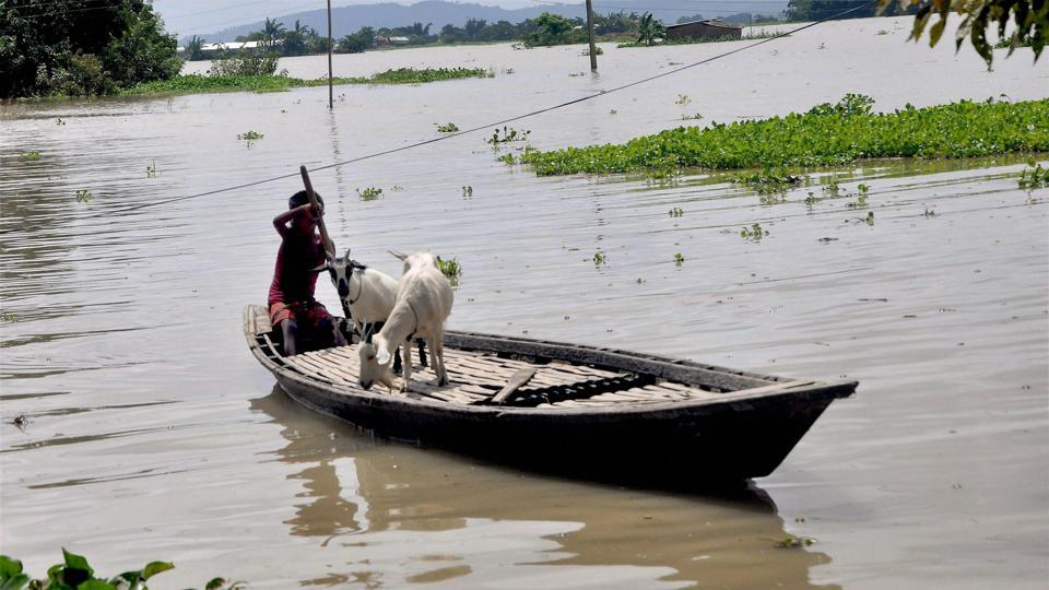 A child with his goats row his boat in the flood affected Khanamukh village in Morigaon. (PTI)
