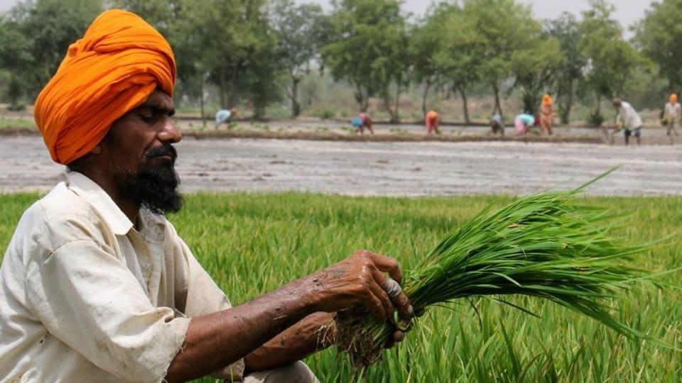 Amarinder Singh,Haque panel,Agriculture