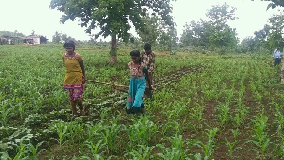 Sisters Radha and Kunti pull the yoke in their land at a tribal village in Sehore district of Madhya Pradesh. (HT Photo)