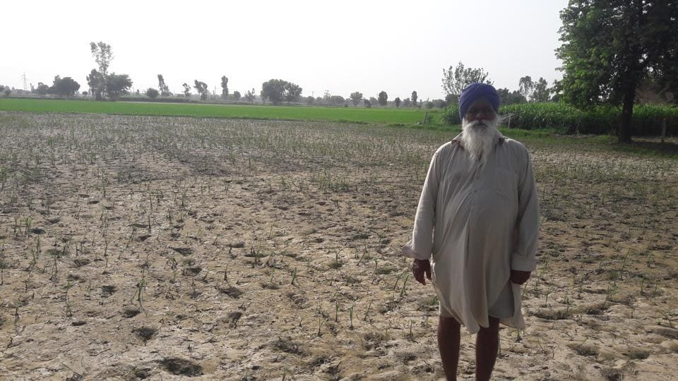 Cotton farmers in the district a situation similar to the one they faced in 2015 when their crop was damaged.