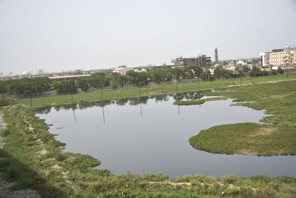 Ghaziabad , India - July 10 The corporation decided to hand over 'city forest' area behind Mahamaya Stadium to Ghaziabad development authority which intends to develop a park in Ghaziabad,India, on Monday, July 10, 2017. (Photo by Sakib Ali /Hindustan Times)
