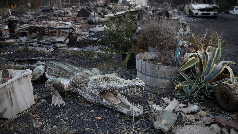 An alligator statue sits next to a home that was destroyed by the Wall Fire in Oroville,. Gov. Jerry Brown declared a state of emergency as 4,000 people were ordered to evacuated their homes as the Wall Fire continues to burn. (Mike Eliason / AFP)