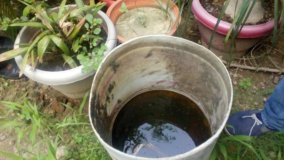 Noida schools,dengue,malaria