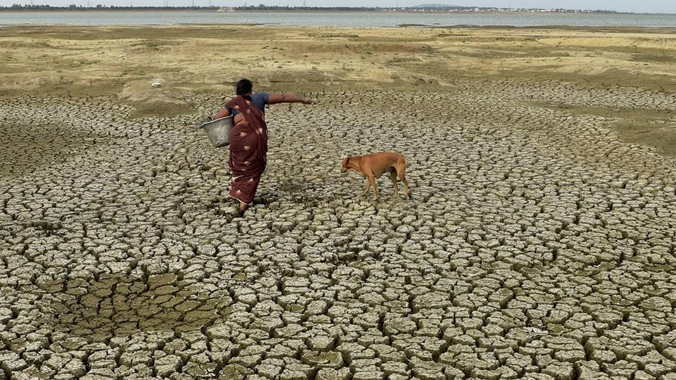 A fish vendor walks on the parched bed of Chembarambakkam Reservoir near Chennai. Considered to be the worst in the past 140 years, the drought has dried up lakes and reservoirs in the region, which  has impacted the drinking water availability in the city. (R Senthil Kumar/ PTI)
