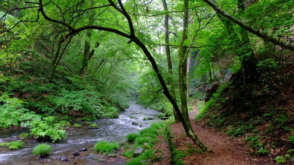 'Forest bathing' involves walking through a beautiful, peaceful natural area and absorbing the natural surroundings.