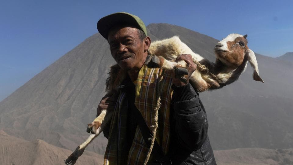 A villager carries his goat to be made as an offering to Mount Bromo. The festival's origins are believed to have begun during the Majapahit kingdom. (Zabur Karuru  / REUTERS)