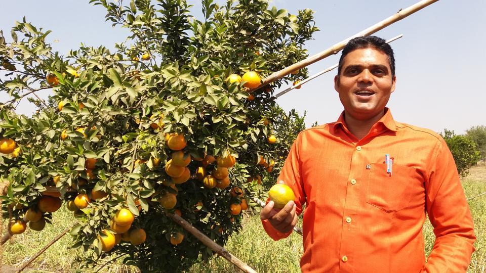 J P Chhayal, a high school teacher at his orange farm in Kadiya village.