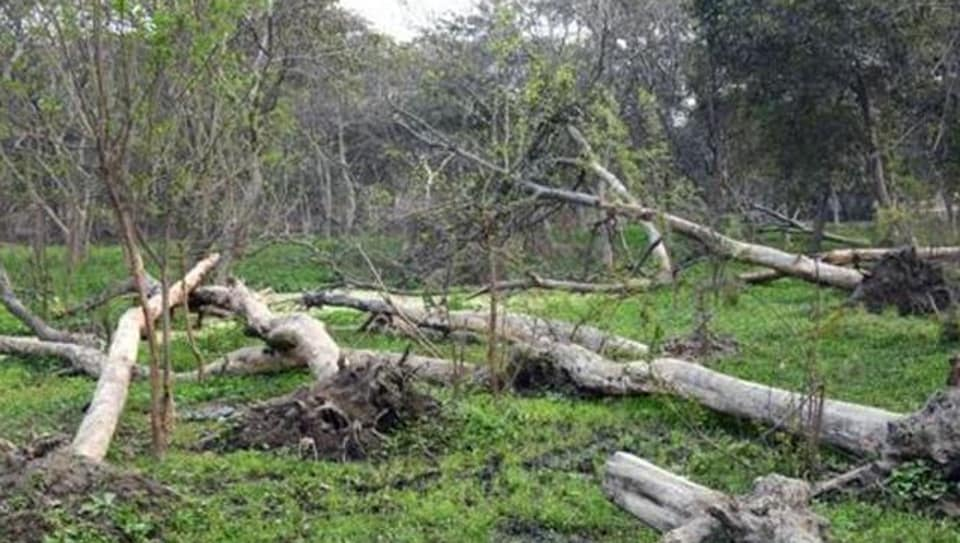 National Green Tribunal,Peacock Environment & Wild Life Protection Society,Punjab