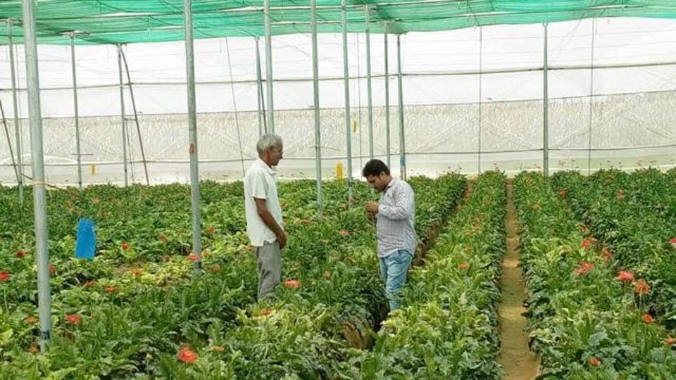 Horticulture institute,Punjab horticulture,CApt Amarinder