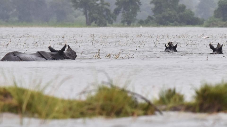 The annual floods assume significance for the ecology of the national park. Although it causes woes for the animals, the park needs to be flooded every year as floods wash away the unwanted weeds and it is very vital for the ecosystem of the park, say experts. (Biju BORO / AFP)